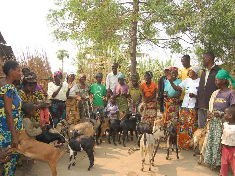People gathered around goats