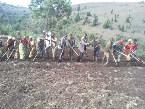 A large group of people lined up with hoes in their hands while they harvest the soil