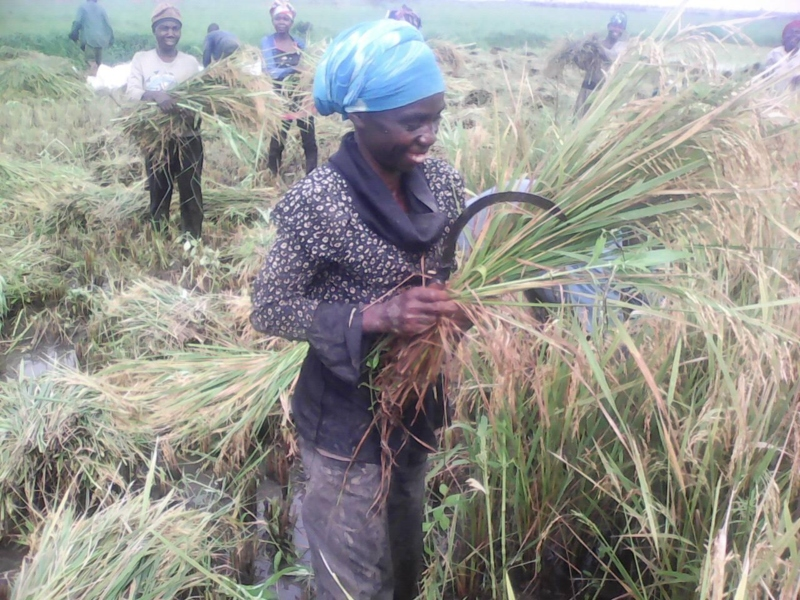A woman smiling while harvesting